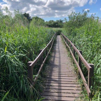 Board Walk In Reeds