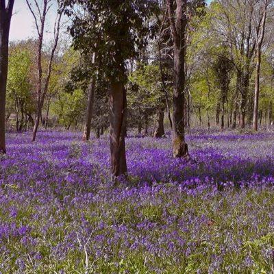 Tiddesley Wood