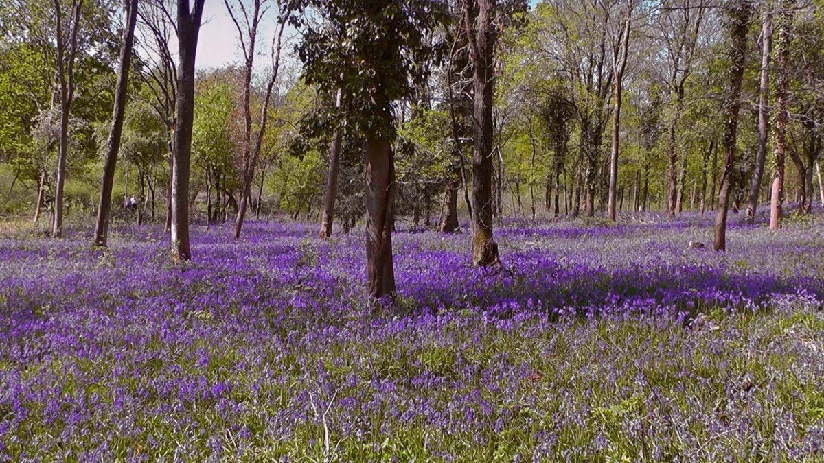 Tiddesley Woods