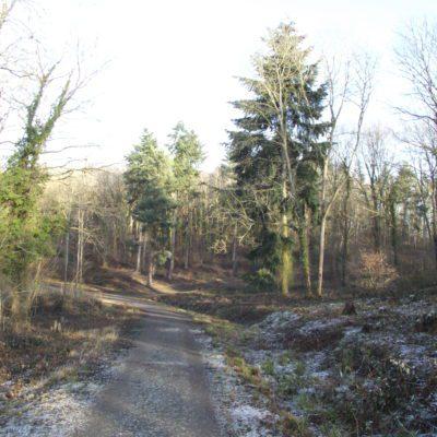 Tiddesley Wood in Frost