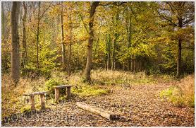 Tiddesley Wood Seating