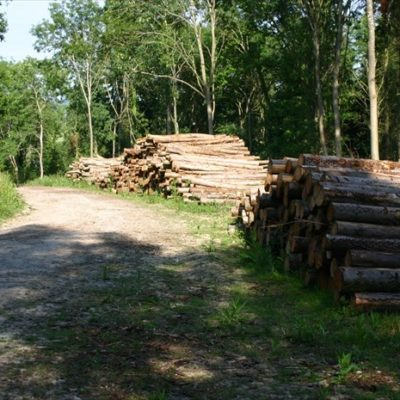 Tiddesley Wood Log Piles
