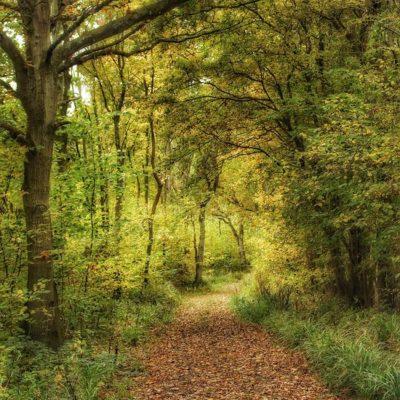 Tiddesley Wood pathway