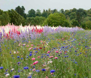 Eco Friendly Confetti Our Confetti Flower Field