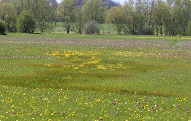 Flood Plain Meadow